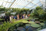 Princess of Wales Conservatory at Kew Gardens