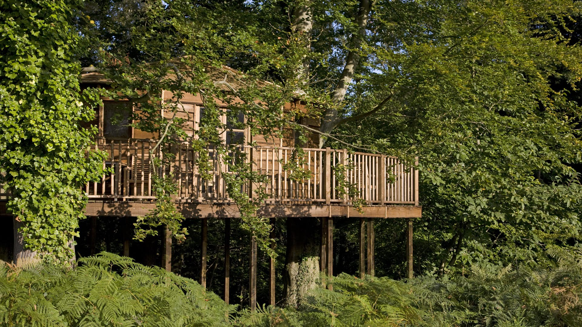 The Treehouse Business New Place Hotel Hampshire